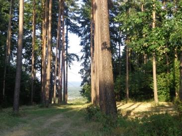 parcours-trail-25-km-04